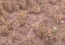 Bauern klagen über Trockenheit