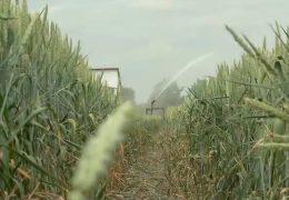 Rheinland-pfälzische Bauern ziehen Bilanz