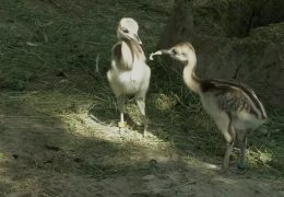 Die Kinderstube im Opel-Zoo Kronberg