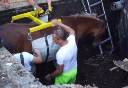 Spektakuläre Pferderettung