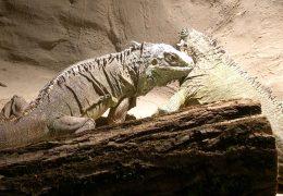 Neues Südamerikahaus im Zoo Neuwied