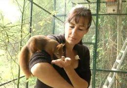Tierschutzpreis für Wildtierstation im Odenwald