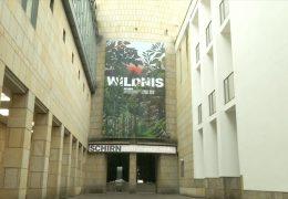 Wildnis in der Frankfurter Kunsthalle