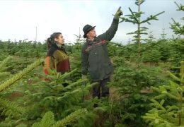 Auf der Suche nach dem perfekten Weihnachtsbaum