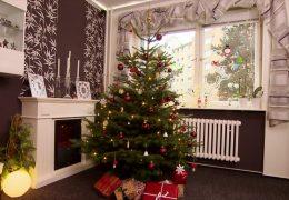 Weihnachtsbäume richtig entsorgen