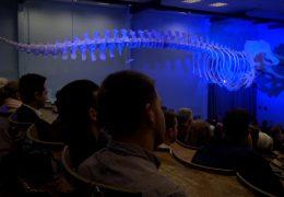 Im Hörsaal schwebt ein Pottwal-Skelett