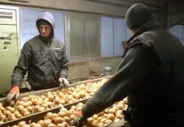 Bauern klagen über erhöhten Mindestlohn