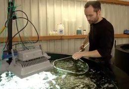 Algenzucht in Biogasanlage
