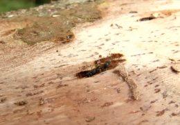 Borkenkäfer werden für Forstwirtschaft zum Problem