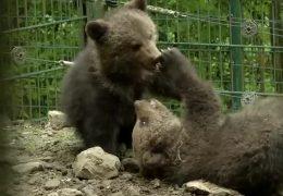 Die Bärendrillinge aus dem Knüllwald