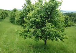 Neue Bäume braucht das Land