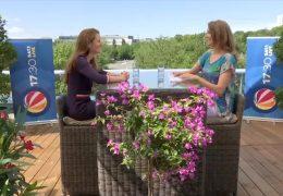 Sommerinterview mit Janine Wissler (Die Linke)