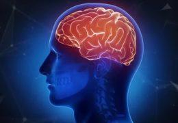 Wissenschaftler wollen Gehirn nachbauen