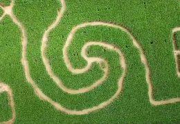 Verloren im Mais-Labyrinth