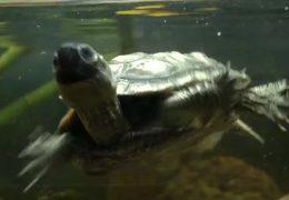 Immer mehr Reptilien aus Privathaushalten landen im Tierheim