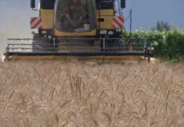 Bauern im nördlichen Rheinland-Pfalz ziehen eine mäßige Erntebilanz