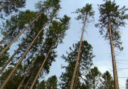 Bundeslandwirtschaftsministerin besucht Waldjugend