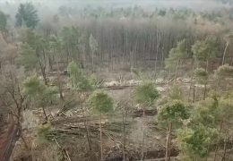 Dem Wald geht es schlecht