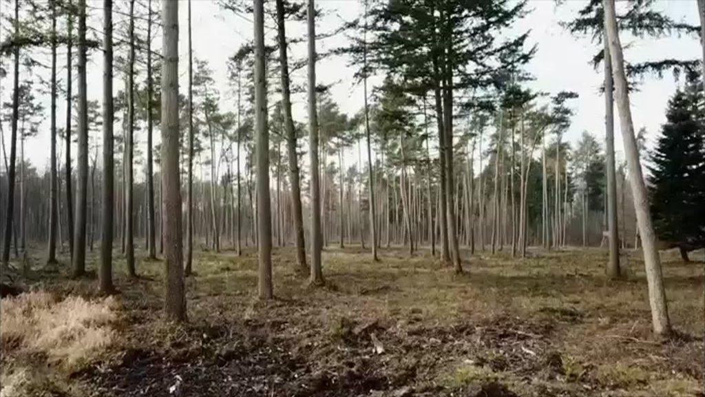 12-Punkte Plan für den Wald