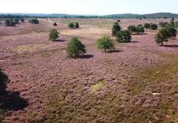 Die Mehlinger Heide Natur pur