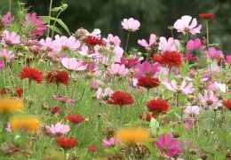In den Gärten soll es blühen