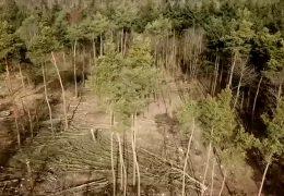 Hitzesommer hat den Wald extrem gestresst