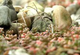 Neuwied verbietet Steingärten in Neubaugebieten