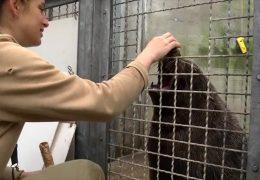 Wenn ein Zootier zum Arzt muss
