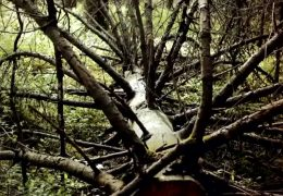 Höfken stellt Waldzustandsbericht vor