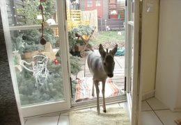"""""""Bambi"""" ist zurück in Groß-Zimmern"""