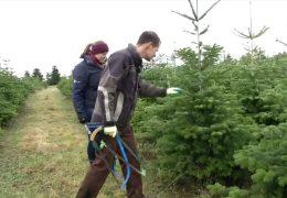 Adventskalender: Sind Weihnachtsbäume noch zeitgemäß?