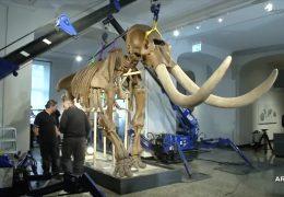 Ein Mastodon geht auf Reisen