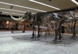 Senckenberg Naturmuseum öffnet seine Pforten