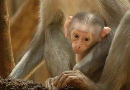 Nachwuchs im Landauer Zoo
