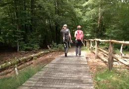 Urlaub zuhause: Vom Urwald ins Dornröschenschloss Sababurg