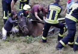 Pferd Johann kann gerettet werden!