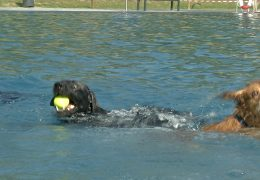 Hundeschwimmen in Mainzer Schwimmbad