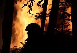 Waldbrand in Dreieich