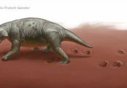 Wanderer finden Ursaurierspuren in der Südpfalz