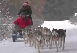 Schlittenhunde in Neuhof