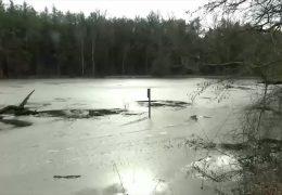 Biber sorgt in Babenhausen für Überschwemmung