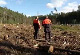 Die Suche nach dem neuen Wald