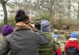 Zoo Frankfurt wieder für Besucher geöffnet