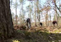 Neue Bäume braucht der Wald