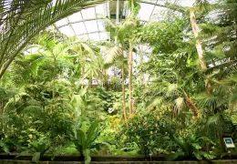 Der Frankfurter Palmengarten feiert Geburtstag