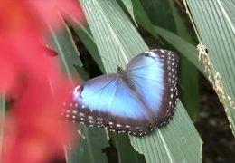 Schmetterlingspark lädt zum Besuch ein