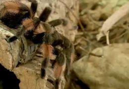 Mit Spinnen und Skorpionen um die Welt