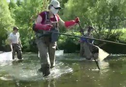 Fischzählung in der Nister