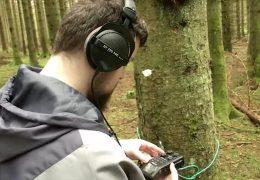 """Forscher """"hören in den Wald hinein"""""""