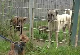 """""""Corona-Haustiere"""" landen im Tierheim"""